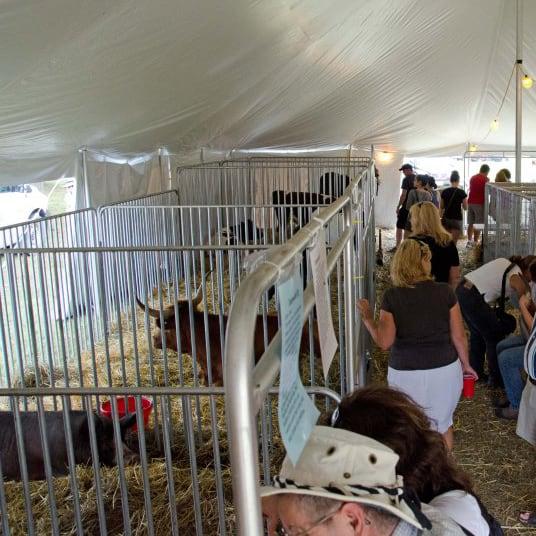 Heritage Breeds Tent