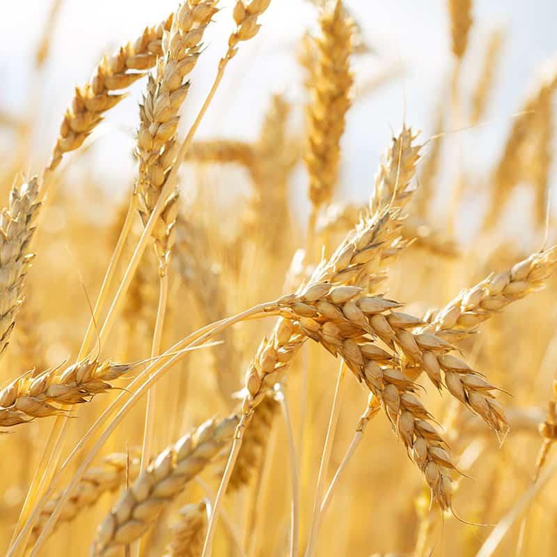 Grain Exhibit